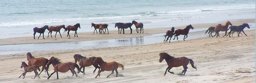 Horse'n Around in North Carolina